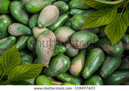 ripe fresh avocados with leaves