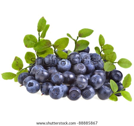 ripe fresh blueberry closeup macro isolated on a white background - stock photo