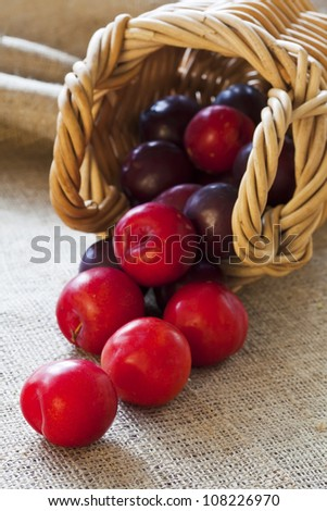 Ripe fresh picked plums scattered from wicker basket closeup - stock photo