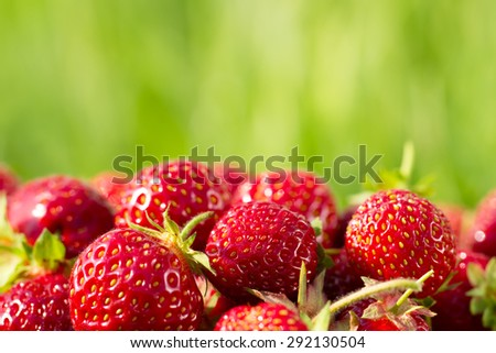 ripe fresh strawberries on a background of green grass