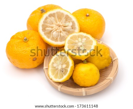 Ripe fruits of hanayuzu (Citrus hanayu) and yuzu (hybrid of Citrus ichangensis and Citrus reticulata, formerly Citrus junos). These have similar appearance and usually confused to be similar species - stock photo