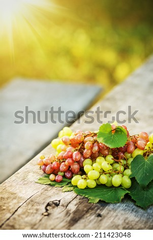 Ripe grapes on a wooden table outdoors. Fresh rich grapes on the vintage wooden table in the vineyard. Good harvest concept.  - stock photo