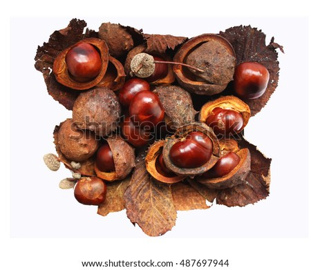 Ripe horse chestnuts on white background