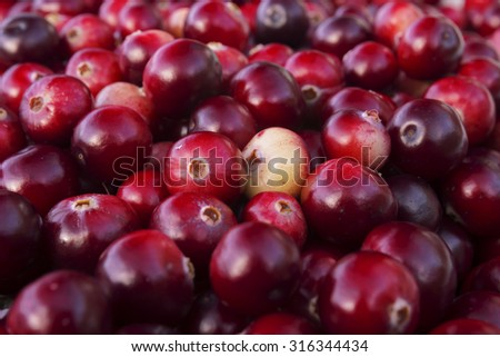 Ripe juicy red cranberries, bright autumn colorful background - stock photo