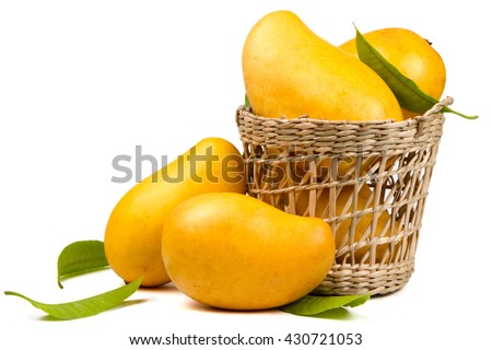 Ripe mangoes fruit in basket with leaves isolated white background