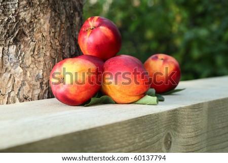 ripe nectarines near to a tree. - stock photo