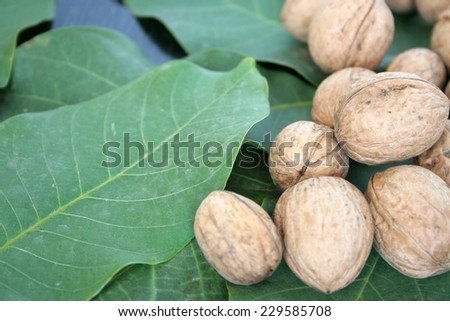 ripe nuts and sheet tree