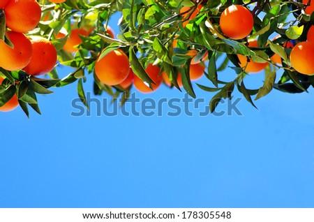 Ripe oranges on sky - stock photo