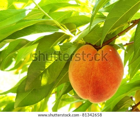 Ripe Organic Peach - stock photo