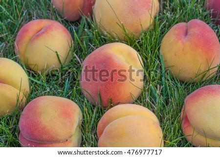 Ripened Peach Crack