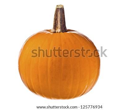 Ripe pumpkin for Jack O Lantern for halloween. - stock photo