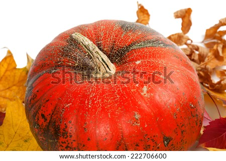 Ripe pumpkin in autumn leaves on white background - stock photo