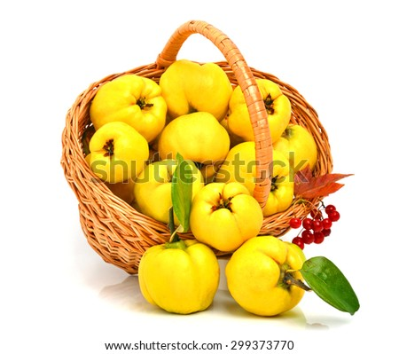 Ripe quince in the basket isolated on white background