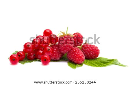 Ripe raspberry and redcurrants on a white background - stock photo