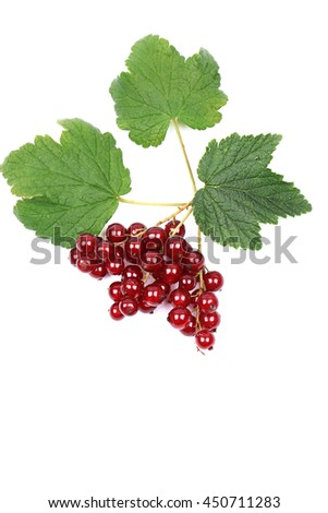 ripe red currant with leaves isolated on a white background