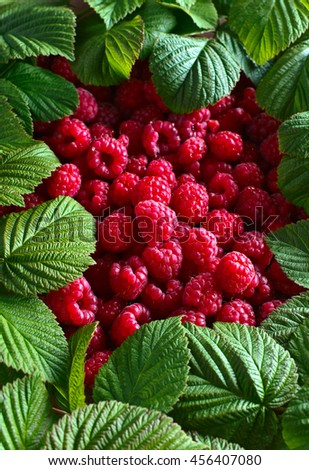 ripe red raspberries and green leaves - stock photo