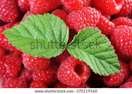 Ripe red raspberries with green leaves close up - stock photo