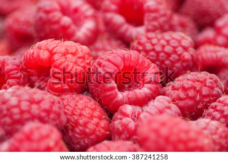 Ripe red raspberries with shallow depth of field - stock photo