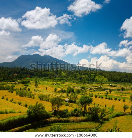 Ripe rice fields at sunny day with mountains on the horizon. Bali, Indonesia - stock photo