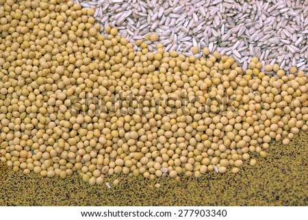 Ripe Soy Beans As Agriculture Cultivated Crop Harvest Concept Background
