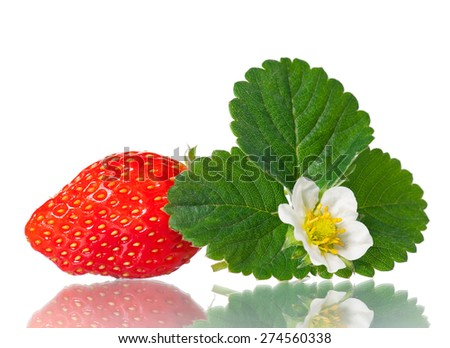 Ripe sweet strawberry with leaf and bloom isolated on a white background - stock photo