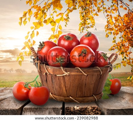 Ripe tomatoes in a basket on a nature background  - stock photo