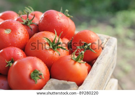 Ripe tomatoes on green garden. Vegetables in a wooden box. - stock photo