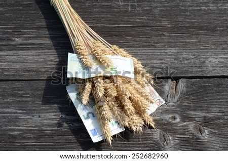 ripe wheat ears and euro money banknote agriculture harvest concept - stock photo