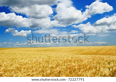 Ripe wheat field and blue sky with clouds - stock photo