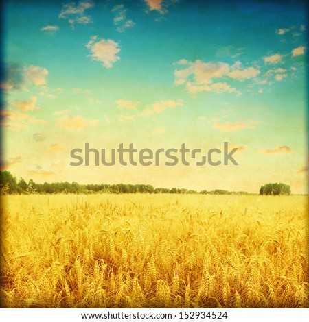 Ripe wheat field at sunset in grunge and retro style. - stock photo