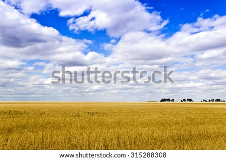 Ripe Wheat field in the steppe - stock photo