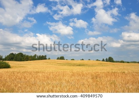 Ripe wheat field with trees