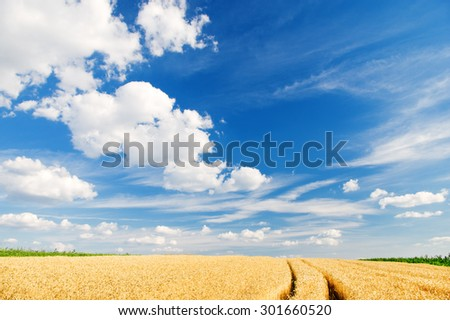 Ripe wheat in a summer landscape - stock photo