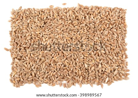 ripe wheat seeds on a white background isolated