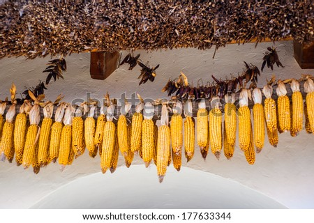 Ripe yellow corn stover string above the door of rural farmhouse symbol of fertility - stock photo