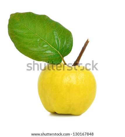 Ripe yellow quince isolated on a white background