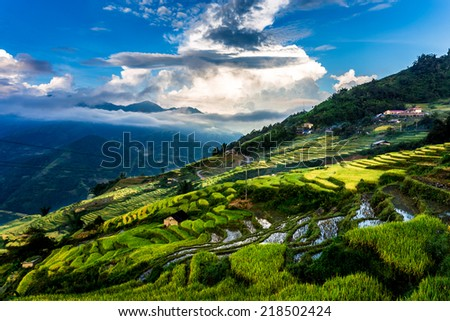 Ripen rice terraces brightened up in the early morning sun lights. Location: Y Ty, Lao Cai province, Vietnam.  - stock photo