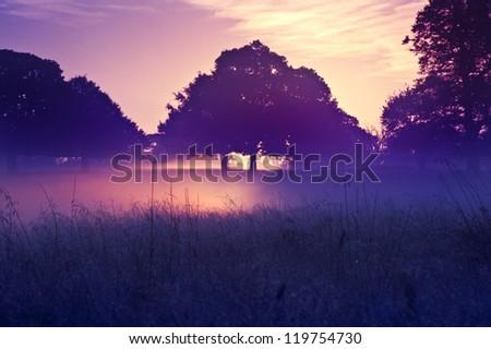 Rising sun illuminates fog from underneath making fog glow eerily - stock photo