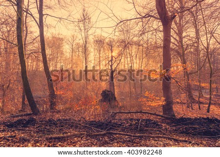 Rising sun in the forest with sunbeams in the mist - stock photo