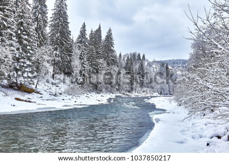 river among conifer forest with snow on the ground in carpathian mountains in evening light