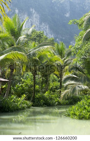 River and palm forest in Thailand - stock photo