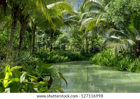 River and palm forest in Thailand 02 - stock photo
