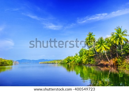 River and palm trees in Thailand