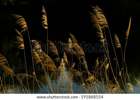 River and reeds. - stock photo