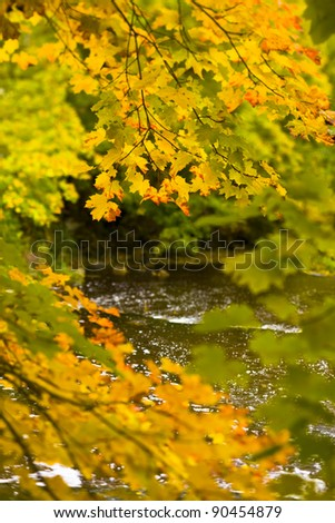 River flowing past colorful autumn maple trees. - stock photo