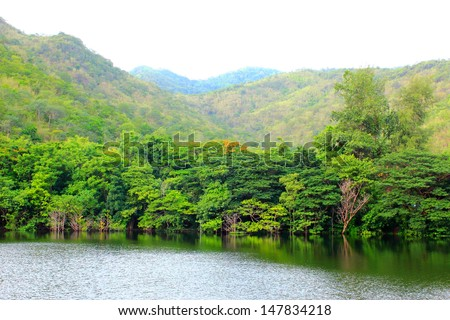 river Forest thai - stock photo