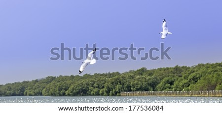 River gull flying above the water, seagull o