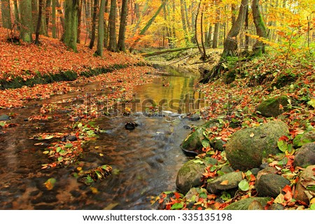 River in forest in autumn season, Poland
