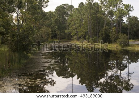 River in jungle. trees reflection on water