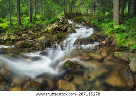 River in summer forest. Beautiful natural landscape